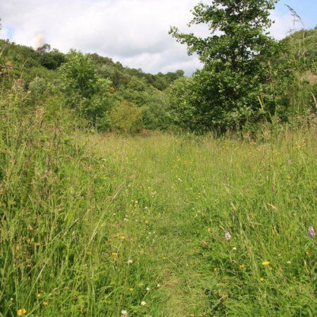 Wrekin Woodland Orchids