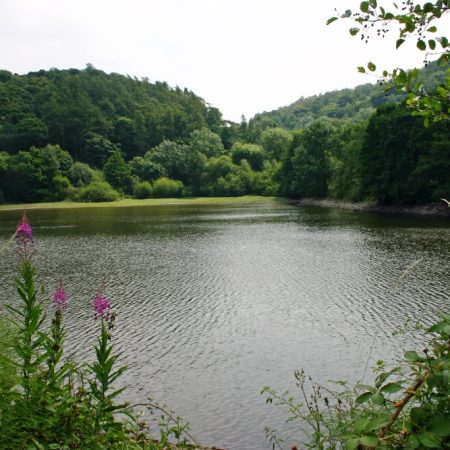 The Ercall Reservoirs