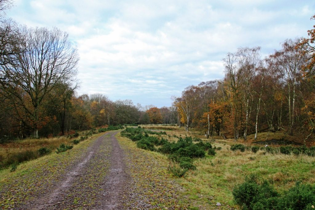 Former Opencast Site In Short Wood