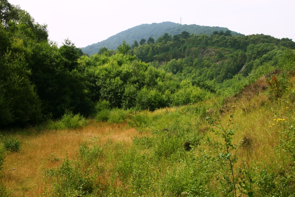 St Lawrence's Hill and The Wrekin from the Ercall Quarries